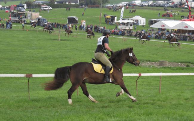 Bauern-Pferderennen Schwarzenburg