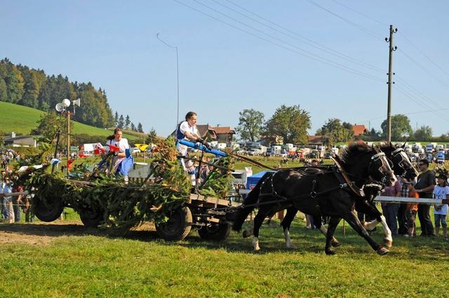 Bauern Pferderennen, Schwarzenburg